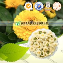 Natural Herbal Plant Raw Material Chrysanthemum