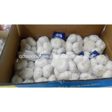 500gx20 Alho Branco Puro Super Qualidade