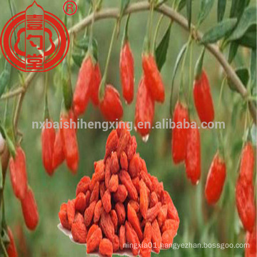 China wolfberry ningxia red goji berries for sale