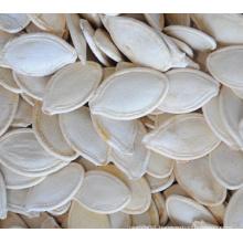 wholesale shine skin pumpkin seeds in shell