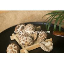 Yongxing Food 2-3 cm Outono Planta Chá Flor Cogumelo