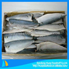 Frozen horse mackerel fish fillet