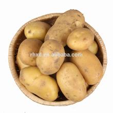 wholesale potatoes fresh potatoes 20kg bags price