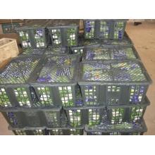 Apio fresco 100% competitivo (750 g)
