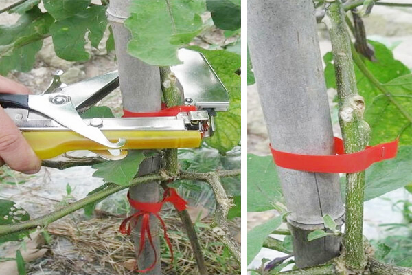 Plant Hand Tying Machine