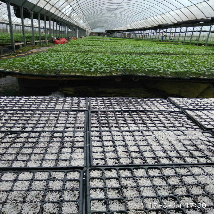 Plastic Seedling Greenhouse Nursery Tray