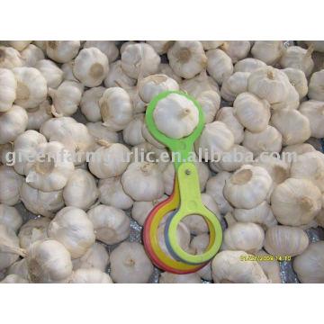 2012 ajo fresco chino 5.0-6.0cm