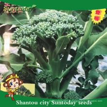 Suntoday nouveau catalogue de graines de jardin légumes F1 achat de graines biologiques en ligne heriloom brocoli graines de choysum (A42006)