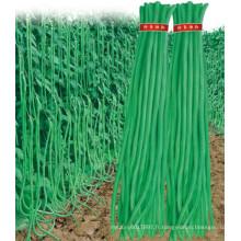 HBE04 Anli vert OP graines de haricots dans les graines de légumes