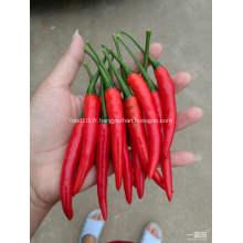 Chili pimenté épicé de Hotsale