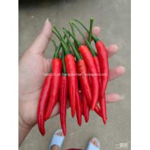 Chili Chaotian picante de Hotsale