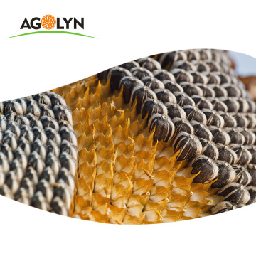 AGOLYN Big Size High Quality Sunflower Seeds Roaster