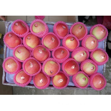 Supple High Quality&Competitive Price Royal Gala Apple
