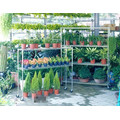 Movable Adjustable Chrome Wire Metal Flower/Plant Carts, NSF Approval
