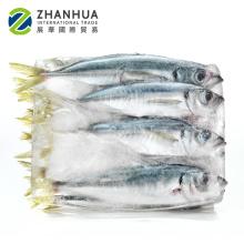 frozen hgt pacific mackerel HGT saba fish prices
