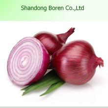 Round Fresh Onion in Hot Sale