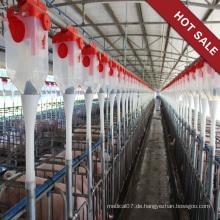 Schweinefarm Verwenden Sie das automatische Fütterungssystem