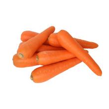 Свежая морковь высшего качества