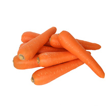 Hochwertige frische Karotte