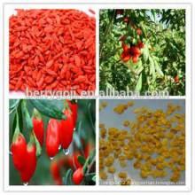 NQ1 Goji Seeds