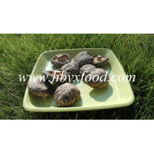 Gesunder frischer Gemüse-flacher Shiitake-Pilz