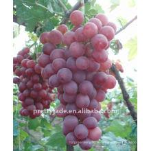Красный глобус виноград