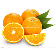 Neue Ernte frische Navel Orange