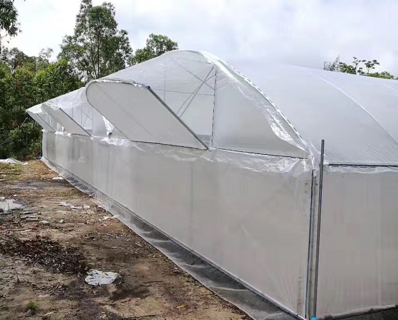 Transparent Woven Film For Greenhouse