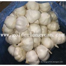 Pure White Knoblauch aus Jinxiang Bereich