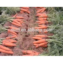 2017 own farm planting carrots from China