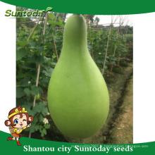 Suntoday facile gestion bouteille gourde graines vente exportation importation dans les entreprises agricoles gujarat graines (16001)