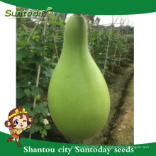 Suntoday простой бутылки управления тыквы семена продажа экспорт импорт в сельском хозяйстве с семенами гуджарат(16001)