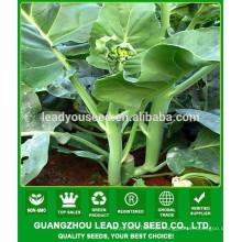 NKL02 Yumei China sementes de hortaliças para venda, sementes de kailan, sementes de couve