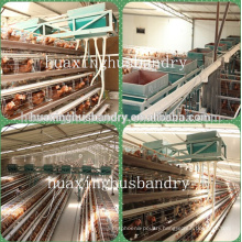 Corrosion Resistant chicken cages coops for chicken shed