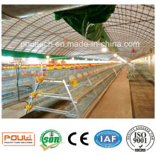 Best Price Automatic a Type Pullet Chicken Cage