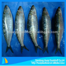price frozen sardine fish varieties