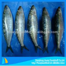 Preço de variedades de peixe de sardinha congelada