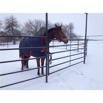 Hot Dipped Galvanized Murah Sliver Horse Horse Fence