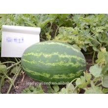NW121 Houhu овальной формы нашивка семян арбуза Китай