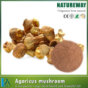 Free sample Agaricus blazei extract