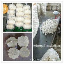 white garlic in 10kg mesh bag