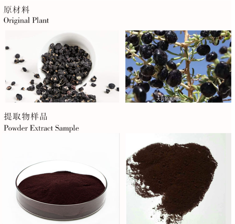 Balck Wolfberry Extract