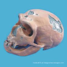 O modelo de esqueleto de crânio da cabeça humana de Neanderthal para o ensino médico (R020608)