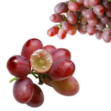 fresh red globe grapes Chinese red grapes Xinjang red globe grapes