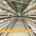 Normative Farm Verwenden Sie 30000 Layers Aufzuchtausrüstung
