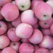 Douce FUJI Pomme Rouge Frais De Chine