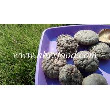 Getrockneter Shiitake / getrockneter glatter Shiitake Pilz