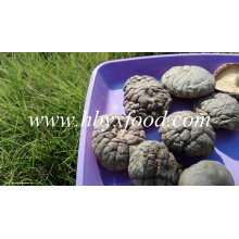 Dried Shiitake/ Dried Smooth Shiitake Mushroom