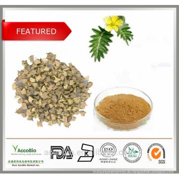 Hohe Reinheit 100% natürliche Tribulus Terrestris Extrakt Pulver Saponins 60% Protodioscin 40%