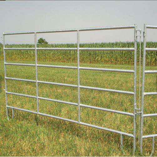 Horse Fencing 01